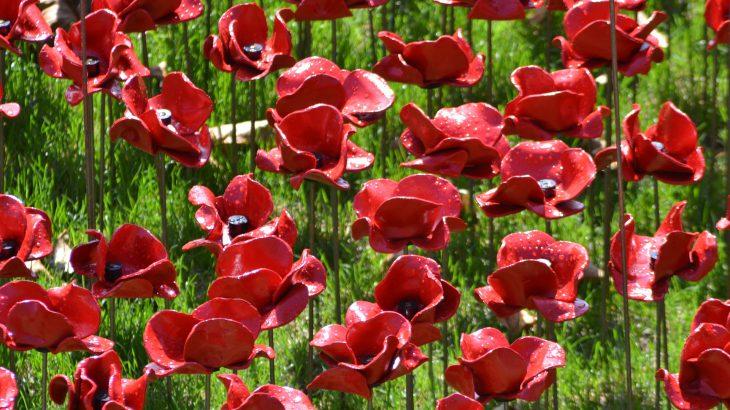 ロンドンで「リメンバランスデー」を体験!真っ赤なポピーで戦死者を追悼