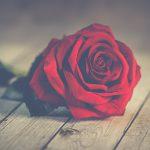 フランスのバレンタイン事情!当日のパリの様子をレポート【日仏カップル】