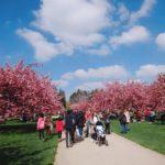 【おすすめ】パリの桜の名所といえばソー公園!2019年お花見情報
